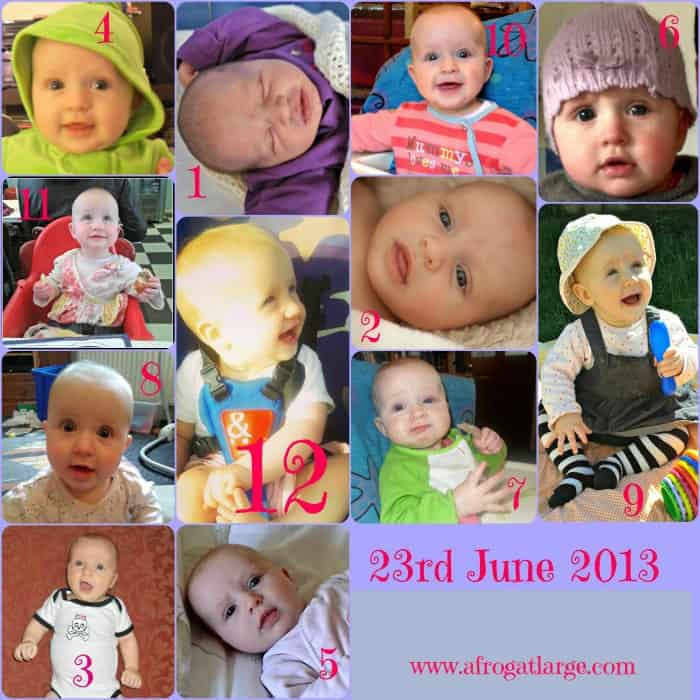 12 Months In the Life of Luciole