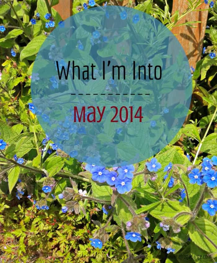 What I'm Into May 2014 blue flowers